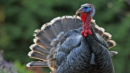 Wordless Wednesday – Turkey!